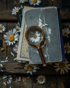 Book photography wallpaper life 47 Ideas for 2019 Witch Aesthetic, Book Aesthetic, Flower Aesthetic, Aesthetic Photo, Aesthetic Pictures, Book Photography, Creative Photography, Photos Amoureux, Daisy Love