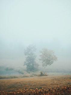 Early morning fog. | Hello Emilie | VSCO Grid