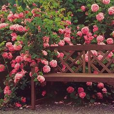 Out in the gardens at Heirloom Roses. #heirloomroses #rose #roses #roses #englishrose #summer#garden#inthegarden #flowers #beautiful #gardenbench