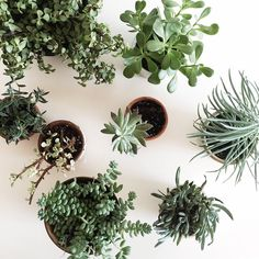 ― Rebekka Seale and Silbia Roさん( 「Monday is the best day in the studio because that's the day I get to water all the little window…」 Green Life, Green Plants, Air Plants, Potted Plants, Ficus, Dame Nature, Cactus Plante, Window Plants, Plant Aesthetic