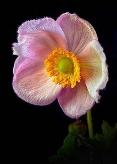 50+ Best Flora Shots (Flowers Photography) | Design Inspiration. Free Resources & Tutorials
