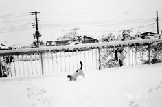 Nobuyoshi Araki, from Sentimental Journey, Winter Journey, 1991 Sentimental Journey, Winter Journey focuses on Araki's early life with his wife Yoko, and as well as her illness and death from ovarian cancer in 1990. The final image in the collection is of Yoko's cat Chiro, playing in the snow after her passing. Chiro would spend another twenty years as Araki's companion, as well as appear in many of his photographs.