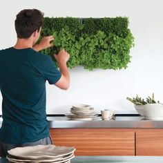 Geef je binnen- of buitenmuur een onweerstaanbare 'touch of green' met de D&M Depot Karoo. Gebruik de plantenbak horizontaal of hang hem verticaal als een schilderij van groen aan de muur! Bevestigingsmateriaal en potgrond wordt meegeleverd.