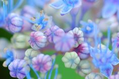 Macro Photography | ... wallpaper / background - macro photography, pastel flower, by annia316