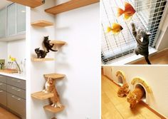 Feline Fantasy: Japanese Homebuilder Creates Ultimate Home for Cat Lovers and their FurryFriends