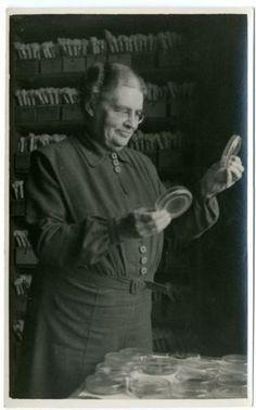 0285-6449   Johanna Westerdijk bij de verzameling van het Centraal Bureau voor Schimmelcultures