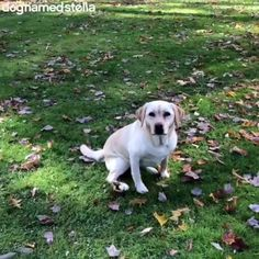 Dogs are Awesome - Tiere - Perros Cute Funny Animals, Cute Baby Animals, Funny Dogs, Animals And Pets, Funny Dog Videos, Cute Animal Videos, Cute Animal Pictures, Animal Antics, Animal Memes