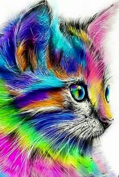 Colorful Rainbow Cat DIY Paint by Number Kit Framed/ Unframed Canvas + Paint + Brush Wall Decor Colorful Animals, Colorful Animal Paintings, Cute Animal Drawings, Drawing Animals, Cat Drawing, Drawing Room, Cross Paintings, Cat Paintings, Cute Baby Animals