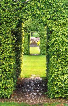I would love to have hedges like this around my entire yard. It's a living fence :)