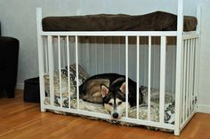 Turn an old crib into a two-story dog bed.