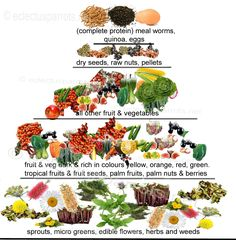 Eclectus Food Pyramid