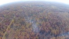 The Kitty Todd Nature Preserve in the Oak Openings Region of Northwest Ohio is a 1,000 acre preserve maintained by The Nature Conservency. Part of this maint...