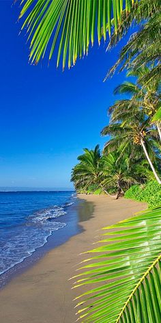 Beautiful Places: Let's Vacation: Molokai Beach, Hawaii Dream Vacations, Vacation Spots, Vacation Travel, Summer Travel, Places To Travel, Places To Visit, Travel Destinations, Photos Voyages, Tropical Beaches