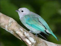 """Comment dit-on """"oiseau"""" en anglais ?"""
