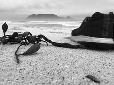 I went for a super long walk today along the beach and it was peaceful and happy.  Part of my quest was to take photos so that I could make them black and white just because of the weather. Im hoping that it comes out well.  #tablemountain #blackandwhite #beach #ocean #nike #beauty #happyplace #shotoniphone #view #mobilephotography #learningphotography #photography #blckandwhitephotography #blackandwhitephoto