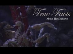 True Facts About The Seahorse