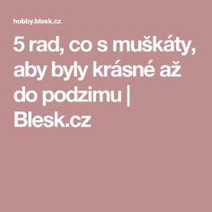 5 rad, co s muškáty, aby byly krásné až do podzimu | Blesk.cz
