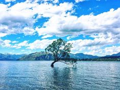 The famous Wanaka tree in summer time  #nz #newzealand #wanaka #wanakatree #lake #travel #iphonephotography #iphoneonly #instagram #instadaily #landscape #outdoors #explore #nature #紐西蘭 #新西兰 #旅行 #旅 #山 #自然 #風景 #instapic #travelphotography #instatravel #naturelovers #cloud #photooftheday #picoftheday Iphone Photography, Land Scape, Summer Time, New Zealand, Cloud, Journey, Outdoors, River, Explore
