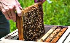 How to become a bee keeper!