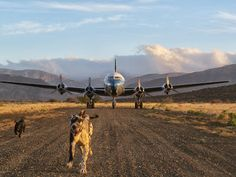 Karoo Hues: LOOK WHAT LANDED HERE Dog Life, Adventure Travel, South Africa, Aviation, Places To Visit, Horses, Drawings, Dogs, Animals