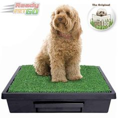 Shop The Pet Loo Online - The best outdoor / indoor dog toilet with grass mat, attractants & pee pods. Easy to clean dog toilet - great for apartments, camping & Outdoor Dog, Indoor Outdoor, Dog Toilet, Cat Run, Dog Potty, Pets, Animals, Profile Website, Toilets