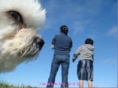 Tobia, il cane più grande che ci sia