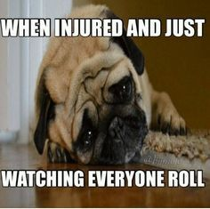 my two favorite things in one meme! pugs and bjj! Pug Love, I Love Dogs, Cute Dogs, Raza Pug, Funny Animals, Cute Animals, Pekinese, Pugs And Kisses, What Dogs