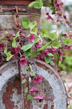 Rustic treasures in garden