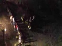 """PLEASE SIGN AND REPIN  Horses Plunge to Death in """"Suicide"""" Race"""