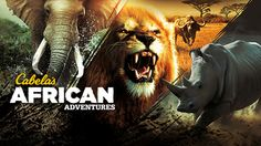 1920x1080 free pictures cabelas african adventures