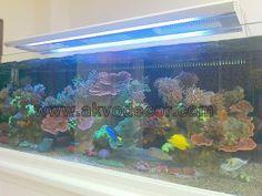 Paket Aquarium Laut Murah -Bagi anda sedang mencari paket untuk aquarium air laut dengan biaya yang relatif murah, kami akan memberikan sep...
