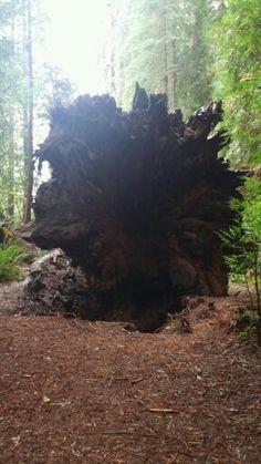 Jebediah Smith Redwood park