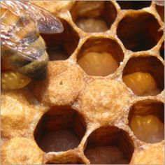 Brood cells up close with babies inside...The larva in open cells are still being fed by nurse bees