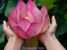 115 best lotus flowers images on pinterest lotus flowers lotus when the lotus blossoms the bees come from all around of their own accord to gather the honey there is a lotus in your heart and its honey is love mightylinksfo