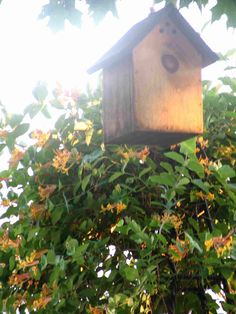 A traditional birdhouse - easily built and hung