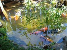 Ponds Backyard Landscape