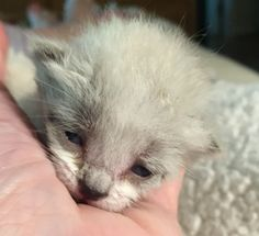 Lydia...13 days old and 124 grams. Adorable!