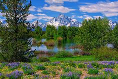Mt Moran view from along Pilgrim Creek  by Greg Norrell in Grand Teton National Park. Spring is starting to look good! This was yesterday. #Tetons #Spring #wildflowers