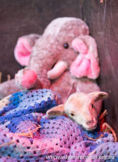 When we saw this particular little lamb covered in filth at Edgar's Mission, it wasn't long before tears were welling up in our eyes.