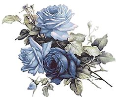 Blue roses--so pretty