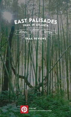East Palisades Trail in Atlanta offers cliff jumping, a dog park, tubing and rafting, a bamboo forest, and a gorgeous hike, all minutes from downtown Atlanta.