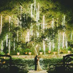 Christmas tree wedding ceremony ideas for 2019 Wedding Ceremony Ideas, Wedding Night, Wedding Venues, Outdoor Night Wedding, Wedding Trees, Willow Tree Wedding, Wedding Stuff, Reception, Wedding Locations California