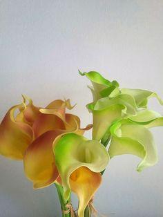 Bonitas y elegantes calas amarillas para decorar cualquier rincón. Muse, Plants, Calla Lilies, War, Yellow Accents, Fake Flowers, Naturaleza, Blue Prints, Plant