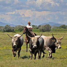 Maremma cowboys in the Parco Regionale della Maremma
