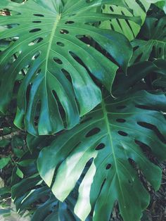jojotastic – travel // Costa Rica + Anywhere (part - Modern Costa Rica Travel, Costa Rica Art, Jungle Vibes, Plants Are Friends, Exotic Plants, Beach Town, Backyard Landscaping, Plant Leaves, Landscape