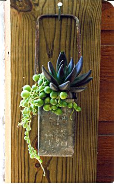 Succulents. Hang it!