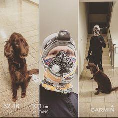 #10km z #furiak , przy nawrotce spotkaliśmy 20-30 dzików 😱💩🐗 500m od nas... na szczęście obyło się bez bliższego spotkania , ale co tam, wbieganie na drzewo mam przećwiczone. .  .  .  #tatobiegaj #tatawformie #biegacz #setter #nigthrun #dogtrekking #respro #smog #pobiegane #garmin #petzl #dzik
