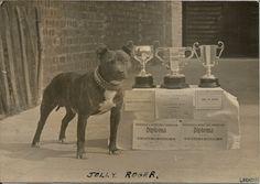 JOLLY ROGER CHAMPION STAFFORDSHIRE BULL TERRIER DOG 1946