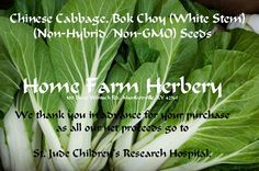 Cabbage Chinese, Bok Choy (White Stem), BUY 1 OR BUY 3 & GET 1 FREE, Order now, FREE shipping