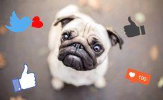 Social_media_dog_title_hafster_Zofka